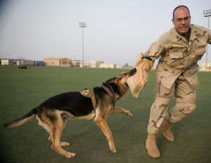 774px-US_Navy_110826-F-EL833-417_Rado,_an_8-year-old_German_shepherd_military_working_dog,_bites_Master-At-Arms_1st_Class_Patrick_Yourg_during_a_patrol_t